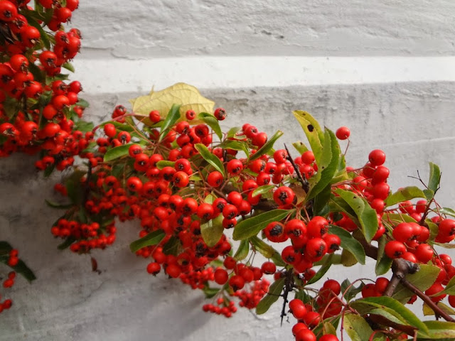 Red berries, white wall