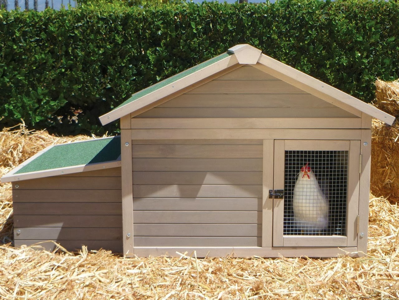 Chicken house plans how to build a chicken house for Poultry house plans for 100 chickens