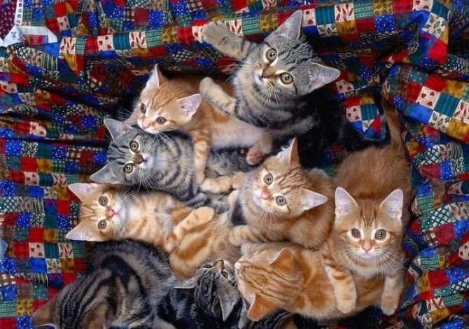 8 chú mèo nuôi dưỡng cậu bé 1 tuổi
