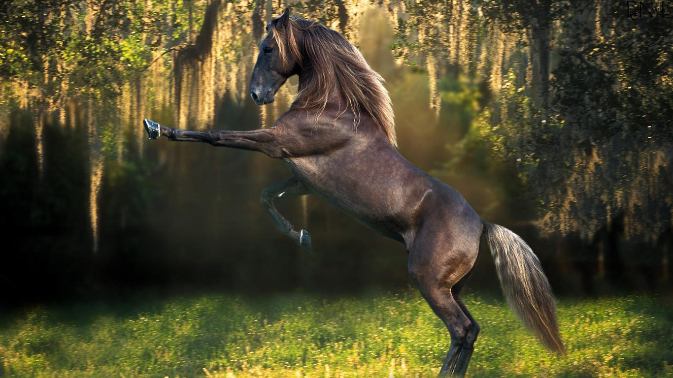 Simple   Wallpaper Horse Forest - Top-Class-Horses-HD-Wallpapers-for-Riders-%5B1366x768%5D-(4)  Snapshot_48259.jpg