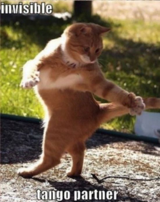 Funny Cats Pictures ,Images and Cats and Dogs funny photos German Shepherd Dog Reviews