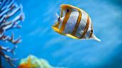 #1 Fish Wallpaper