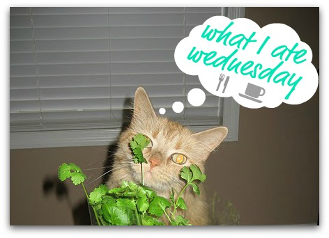 madison the cat silly WIAW what i ate wednesday