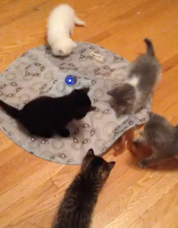 kitten playtime!