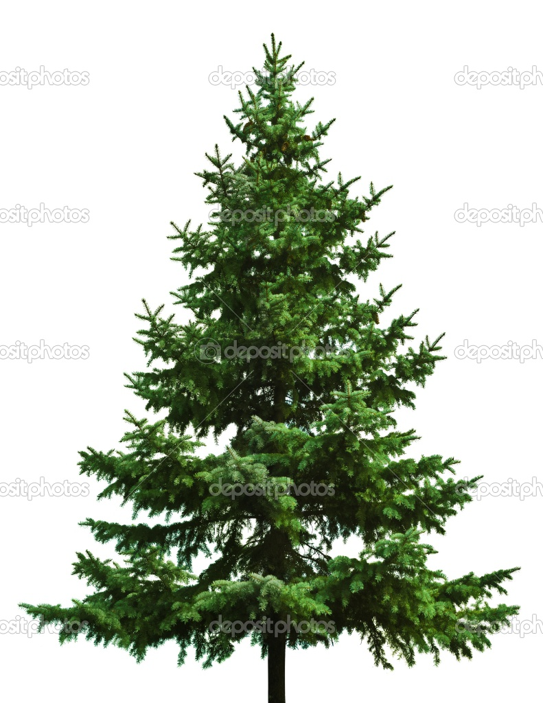 How Long Do Real Christmas Trees Last