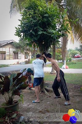 mknace unlimited | edisi tebang pokok kelapa dan lagi