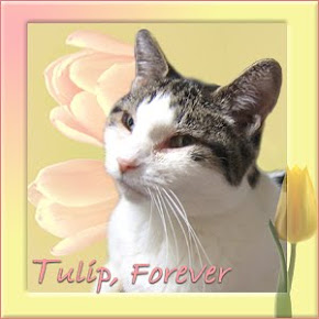 Tulip we'll miss you