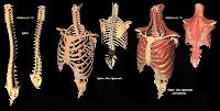 3d Human Anatomy4