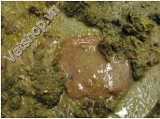 Hình 3: Phân tiêu chảy có máu và chất nhầy.