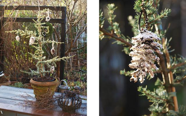 Cedertræ  med kogler som naturligt julepynt