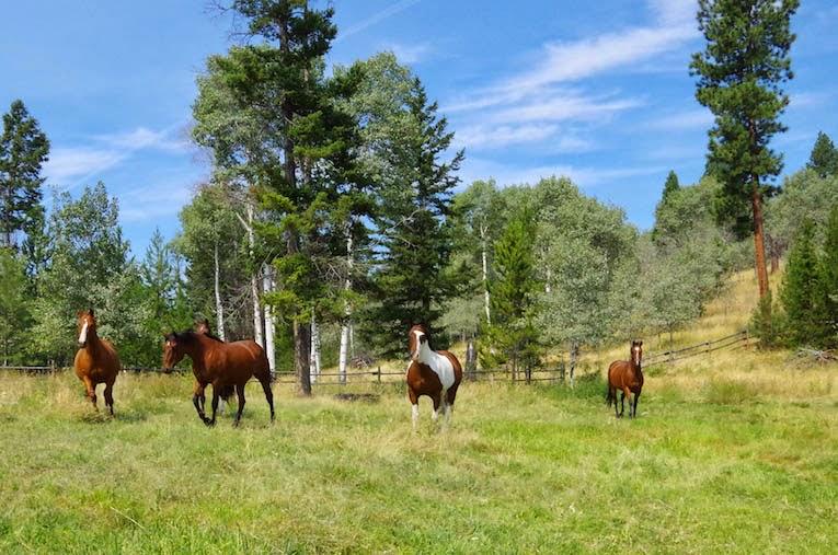 Horses- BTBU
