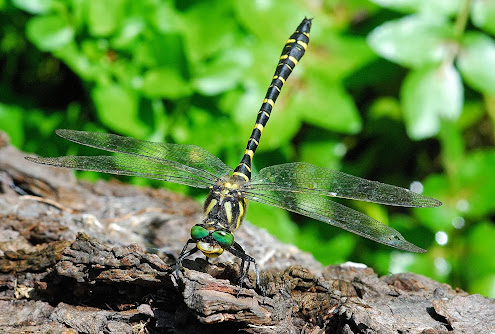 My Dragonfly Photo Website