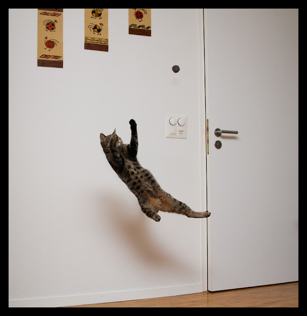 mid air cat, funny cat pictures, funny cats