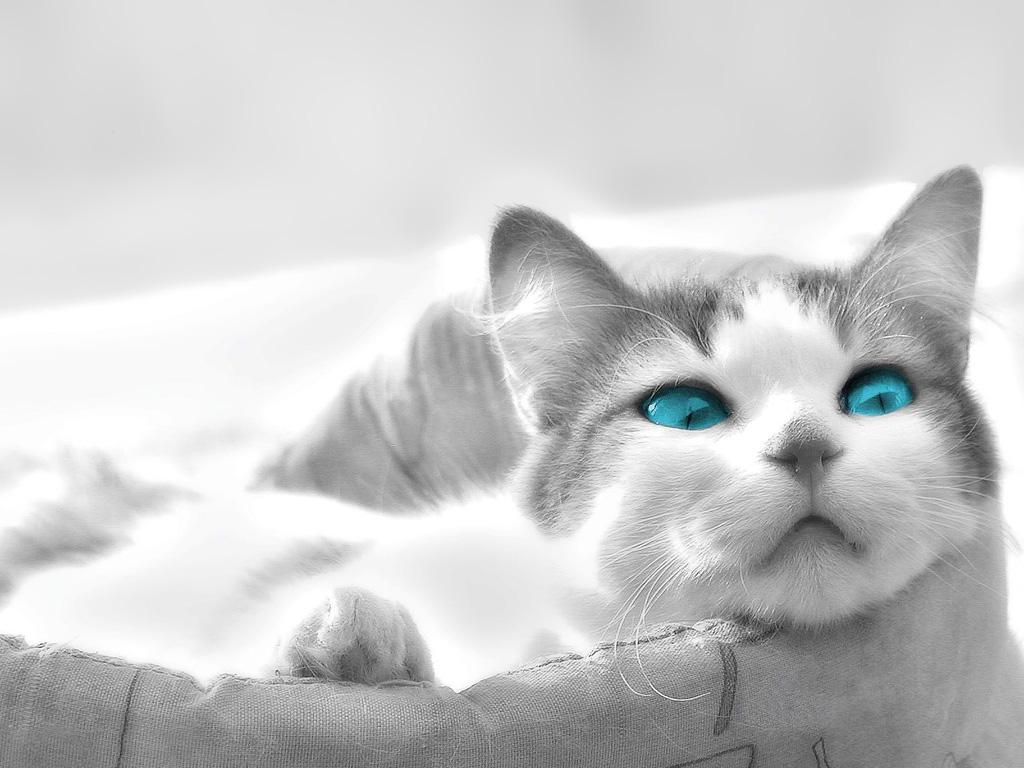 http://1.bp.blogspot.com/-bq7fDI6BAdg/TW93CETXzgI/AAAAAAAAFnA/ynjTNMs4HLE/s1600/cat.jpg