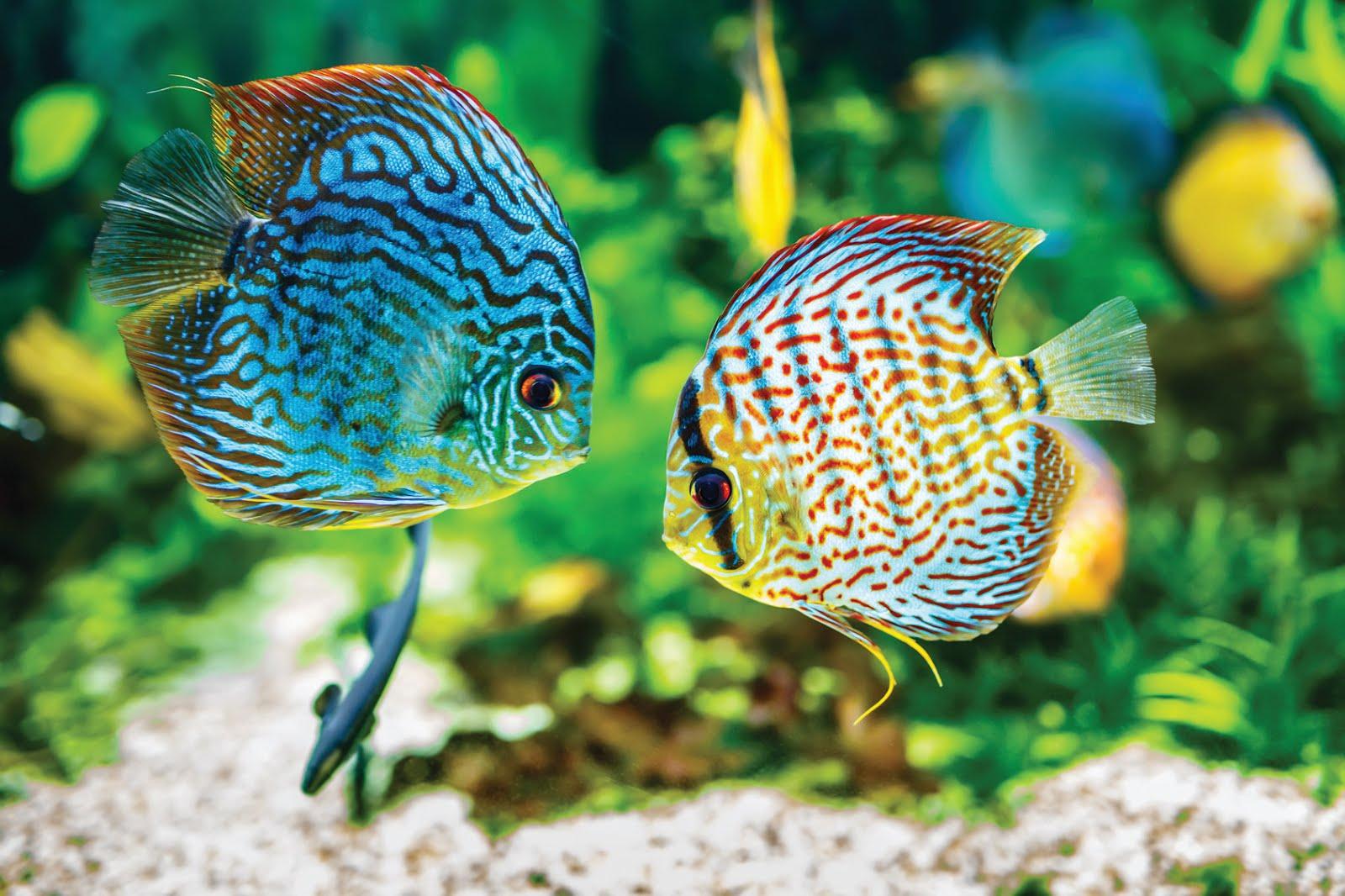 Oświetlamy Akwarium Blog Zookarina