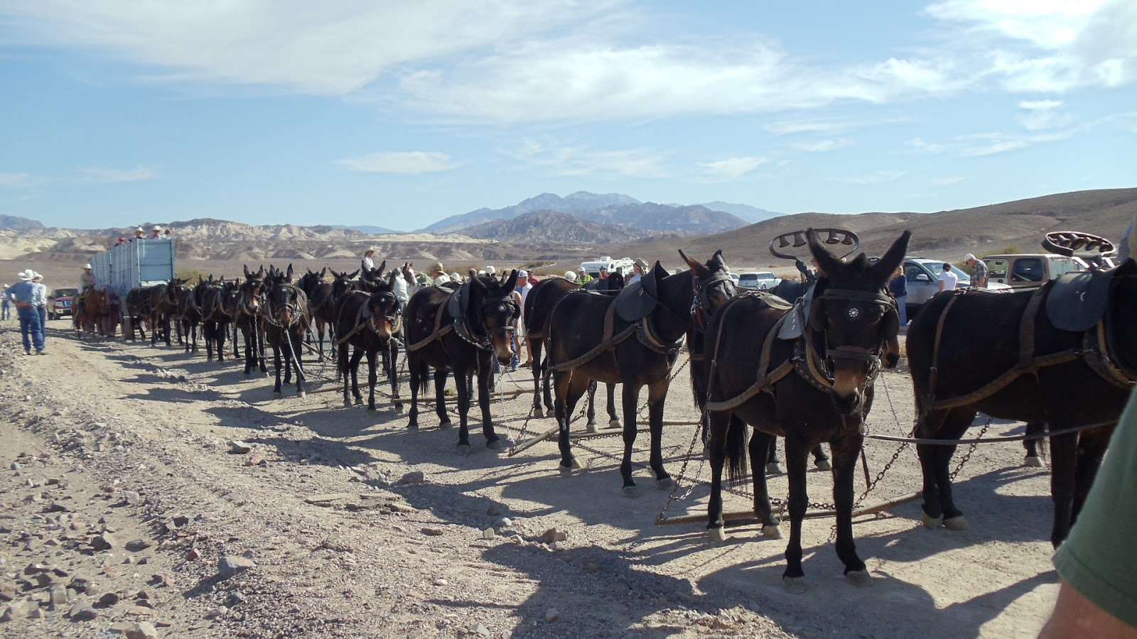 Trailing to patagonia death valley and las vegas enter sarah and matt for 20 mule team borax swimming pools