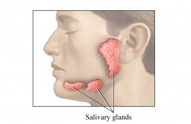 Salivary Glands and their location