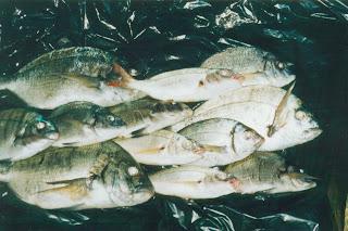 pesquera+en+2003.jpg