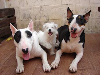 Happy Family : ครอบครัวสุขสันต์ แพนด้า แพนเค๊ก ปีเตอร์แพน