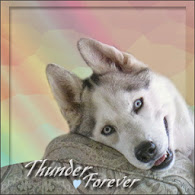 RUN FREE THUNDER...Love Madi