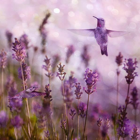 Purple Hummingbird in purple fairy land