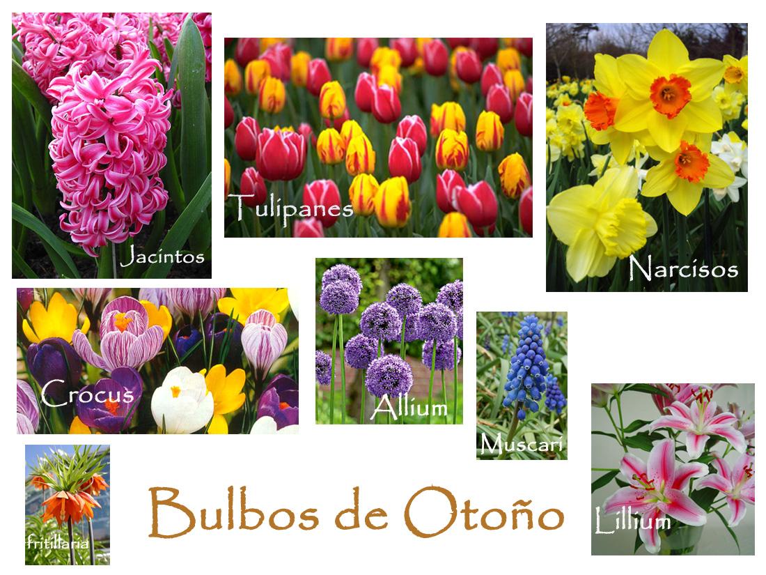 Vivir en las jarillas bulbos de oto o - Bulbos de otono ...