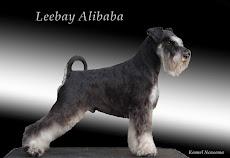 Eldar's far, Leebay Alibaba