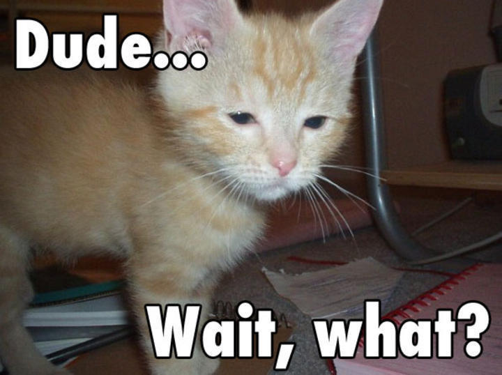 funny pictures of cats and kittens funny pictures of cats and dogs ...