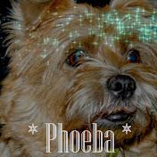 Damens dejlighed, Phoeba.