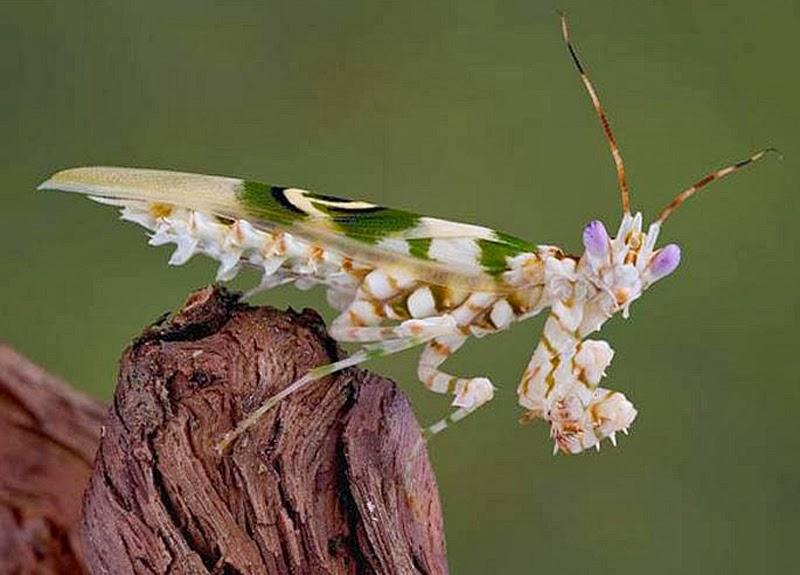 Những loài vừa giống thực vật vừa giống động vật