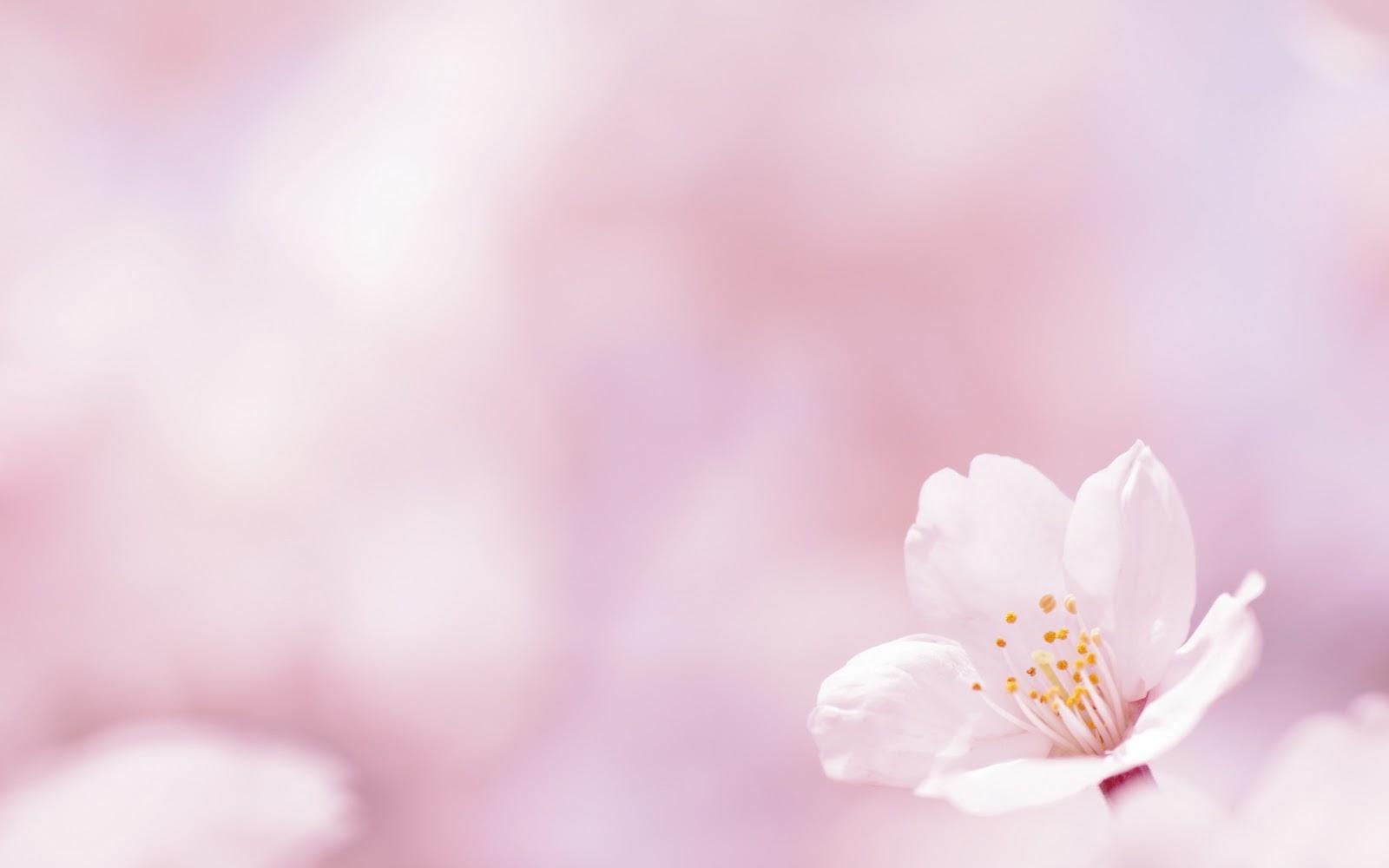 Wallpapernarium fondos de pantalla de la primavera for Fondo de pantalla primavera