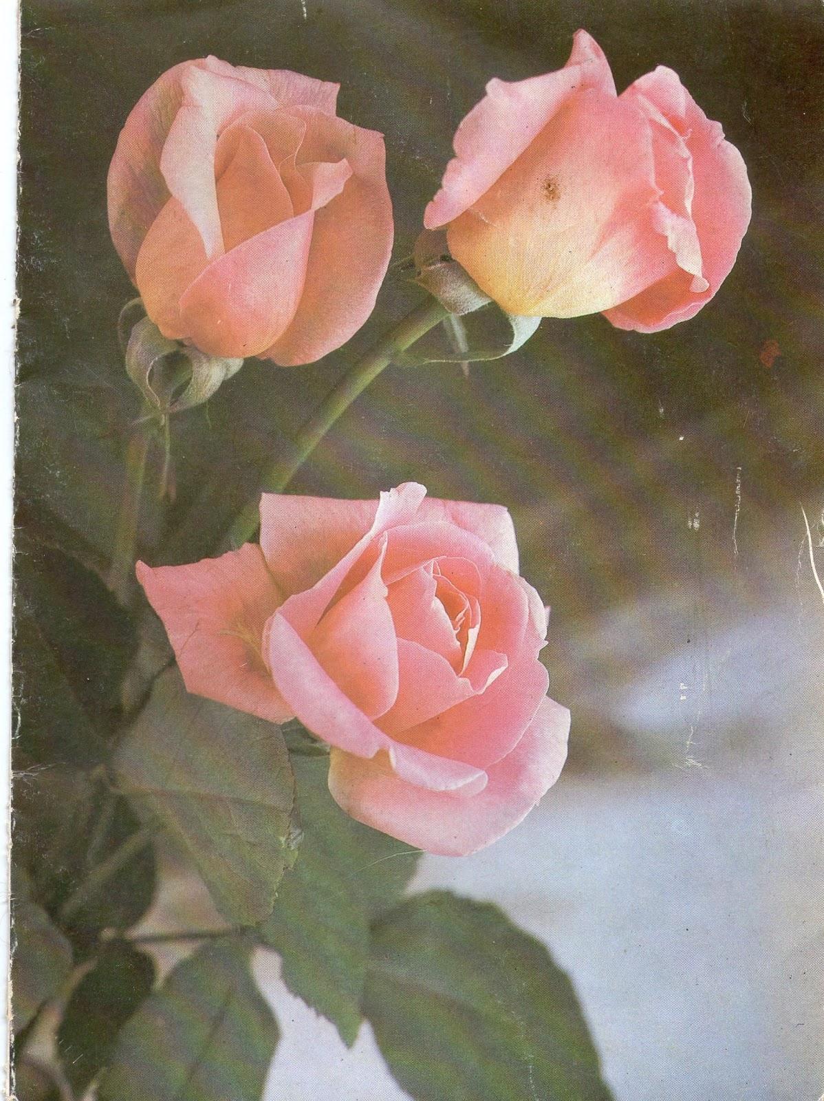 Открытка с днём рождения милому 95