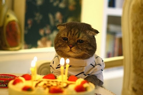 Unhappy Birthday Cat and Cake for R-dub