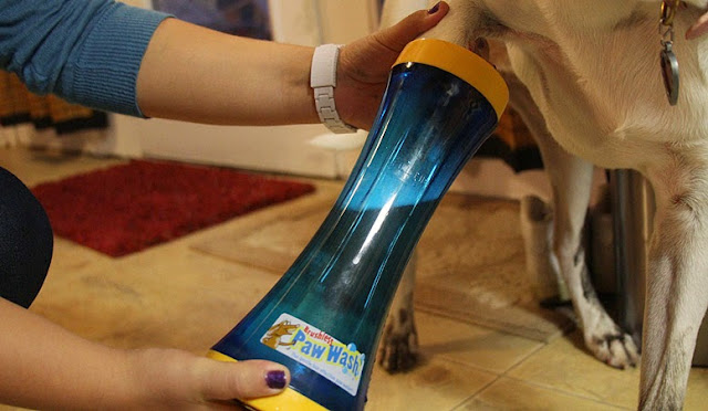 Creative Dog Products and Gadgets (15) 7
