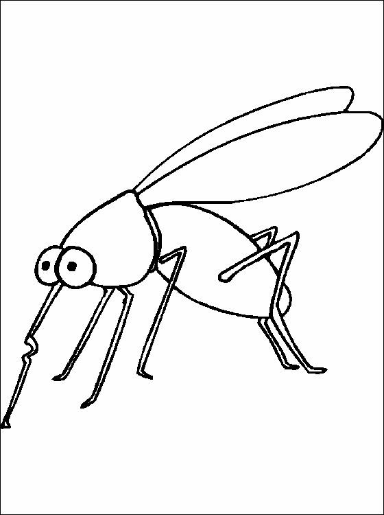 Desenho de mosquito para colorir cuidado com o mosquito transmissor de dengue desenhos para - Fotos de insectos para imprimir ...