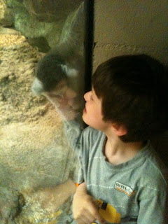 Little boy nose to nose with a lemur