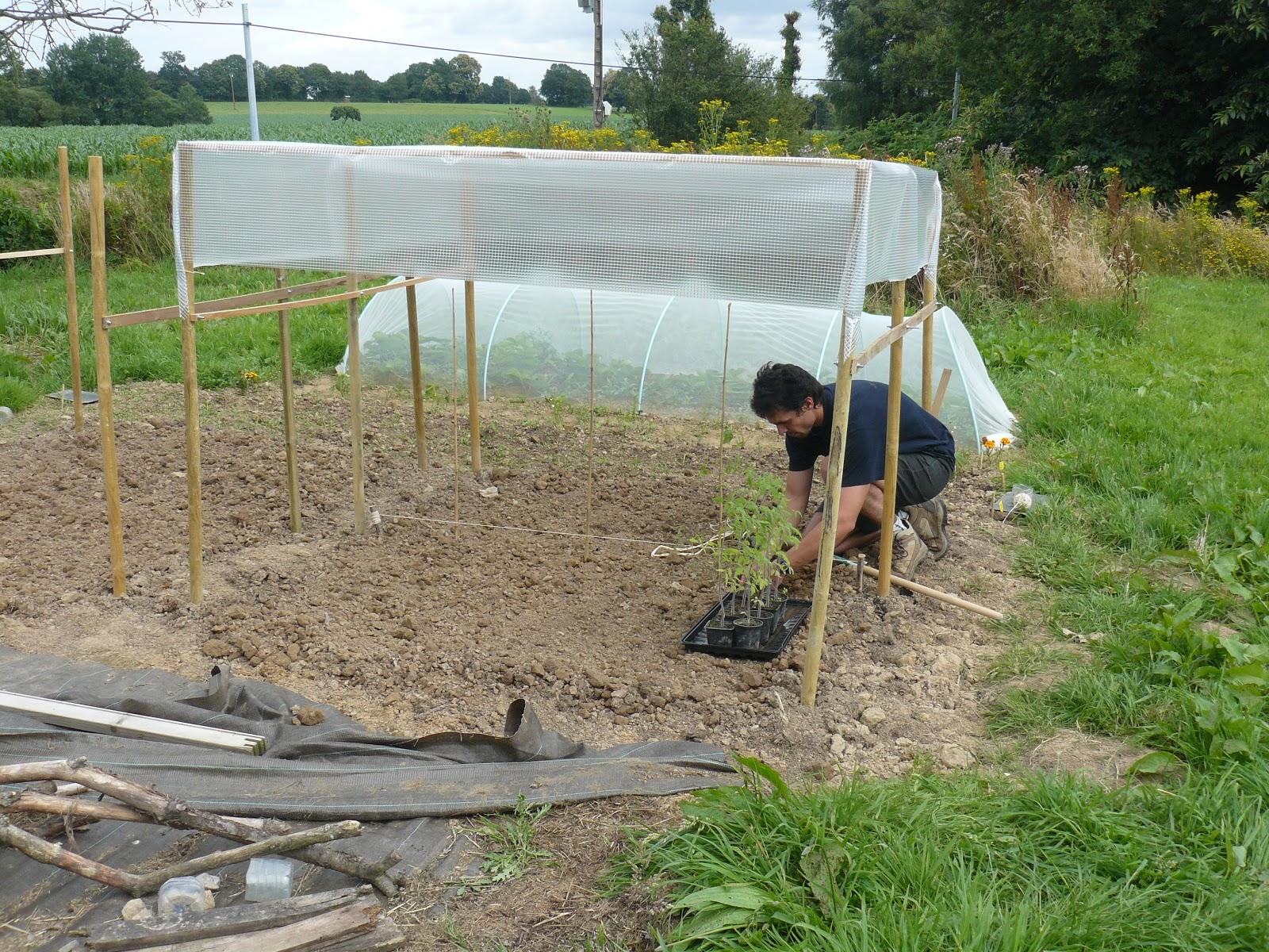 Le jardin des doud 39 l 39 abri tomates - Comment faire grossir les tomates ...