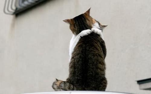 Gambar-Gambar Kucing Kocak