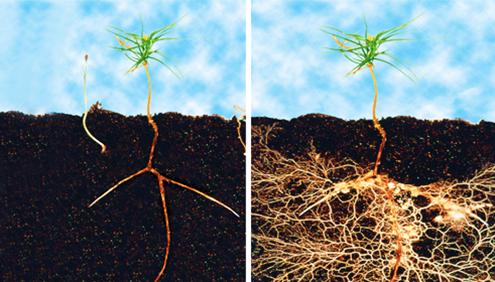 http://1.bp.blogspot.com/-btMaLdUSl90/VX8eXAcVLJI/AAAAAAAAF2g/e04VPrSWv9I/s1600/mycorrhizal-fungi%2B%25281%2529.png