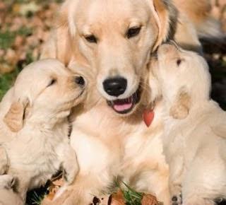 El perrito de 3 meses y mamá