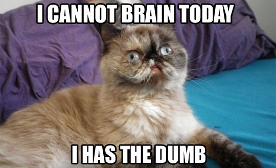 cat meme i cannot brain today dumb the middle flipper july 2015