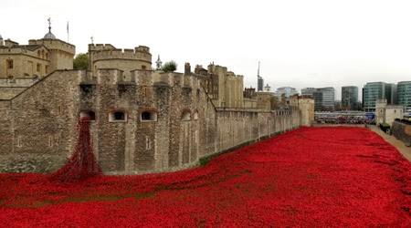 Poppies at the Tower of London, 4 November 2014, V. Oxberry