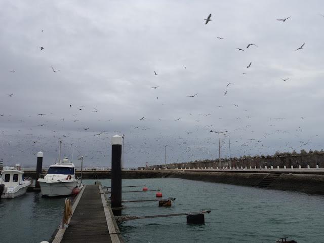 Seaguls population