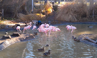 Pink Flamingos at the Tracy Aviary