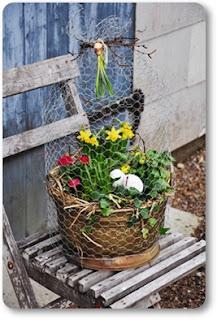 påskplantering, hönsnäs, plantering påskliljor