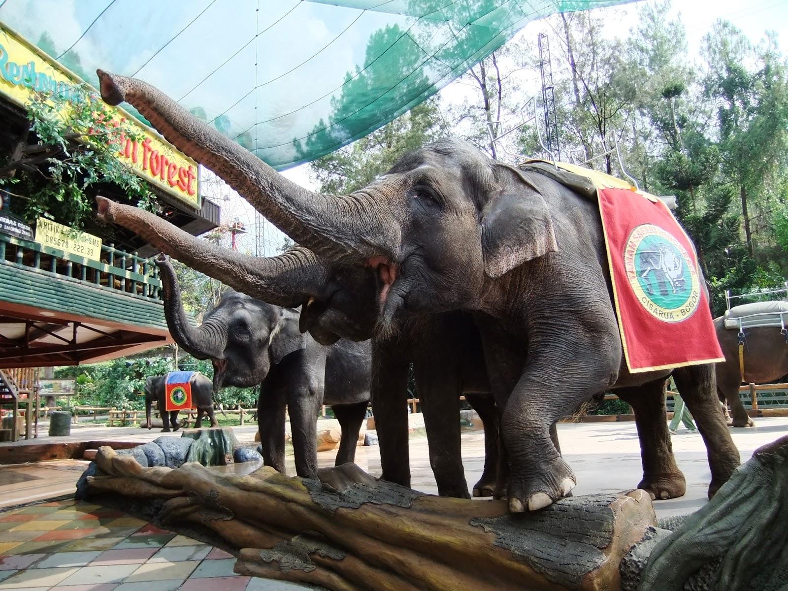 Panduan Wisata Bogor – Puncak dan sekitarnya