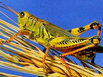 Pengertian Insekta (Insecta)