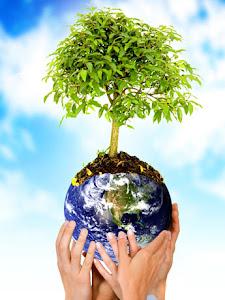 A Natureza é racional e revelará seu segredos àqueles que entenderem a sua linguagem!