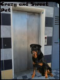 cane aspetta ascensore