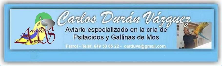 Aviario Carlos Durán, Loritos